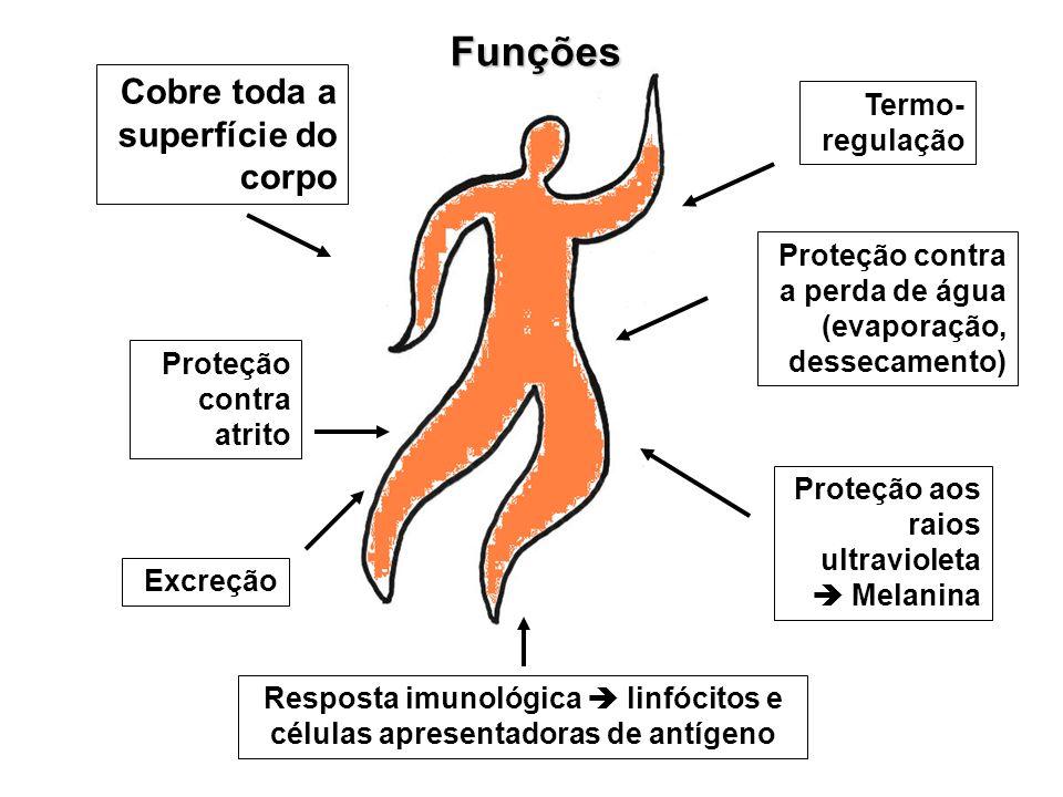 Resposta imunológica  linfócitos e células apresentadoras de antígeno