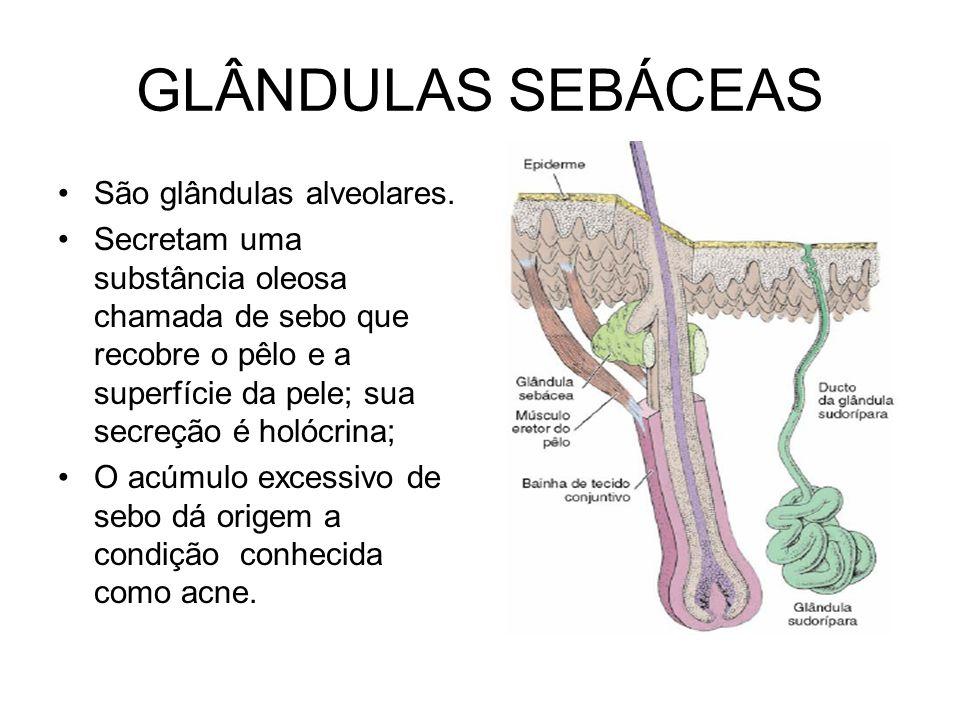 GLÂNDULAS SEBÁCEAS São glândulas alveolares.