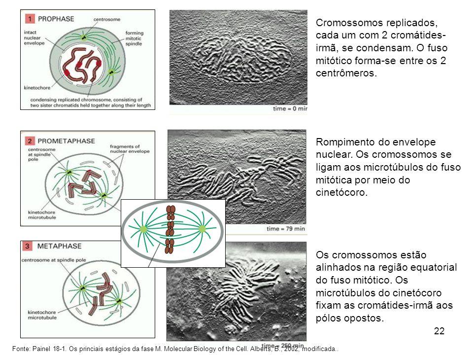 25/03/2017 Cromossomos replicados, cada um com 2 cromátides-irmã, se condensam. O fuso mitótico forma-se entre os 2 centrômeros.