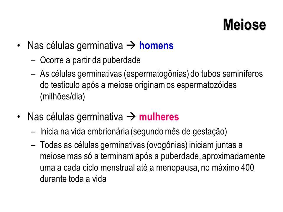 Meiose Nas células germinativa  homens