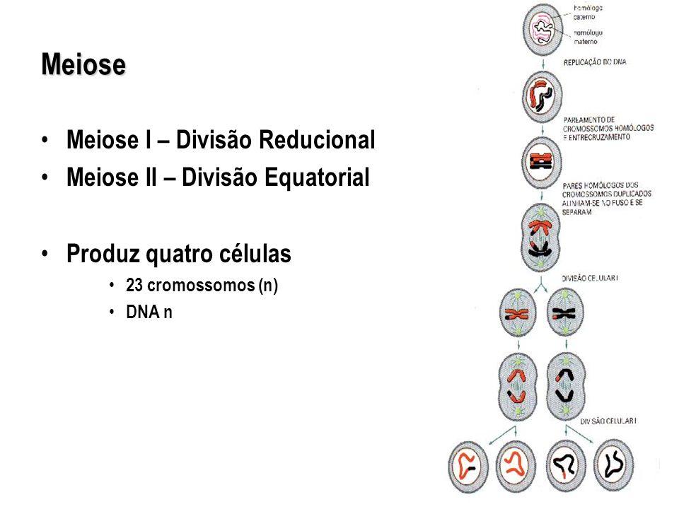 Meiose Meiose I – Divisão Reducional Meiose II – Divisão Equatorial