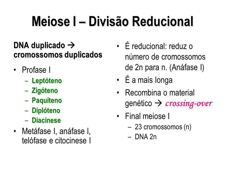 Meiose I – Divisão Reducional