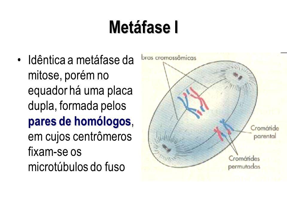 Metáfase I
