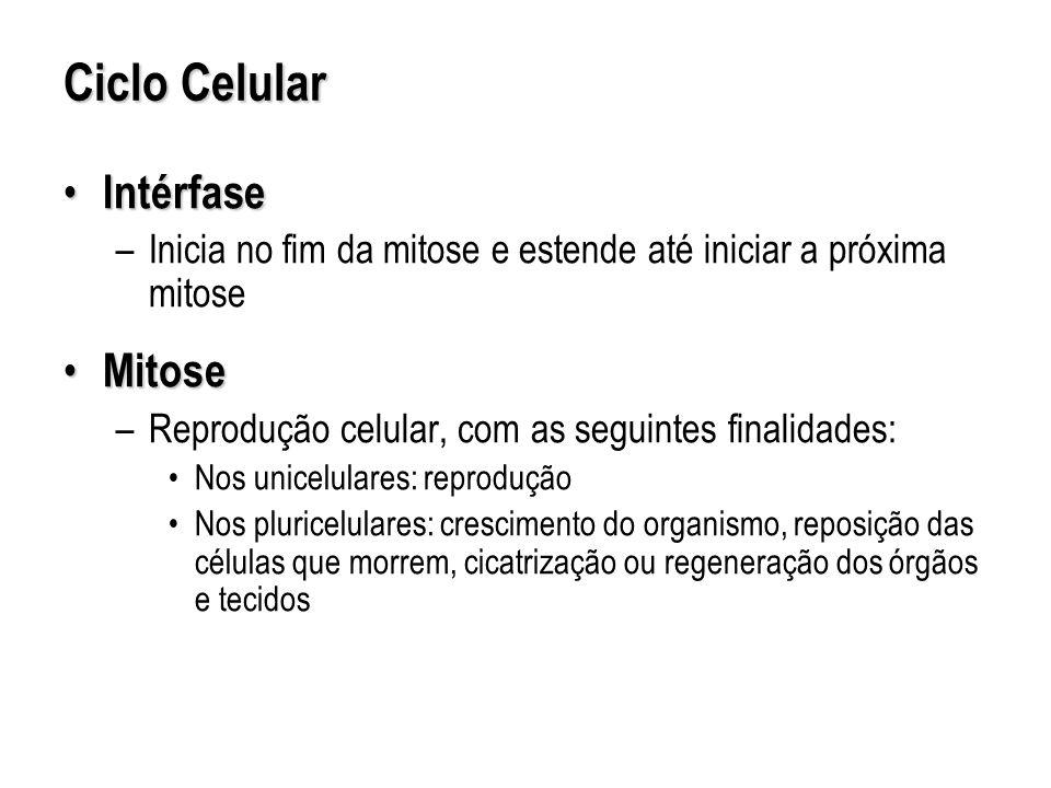 Ciclo Celular Intérfase Mitose
