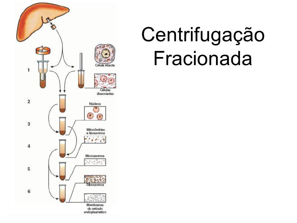 Centrifugação Fracionada