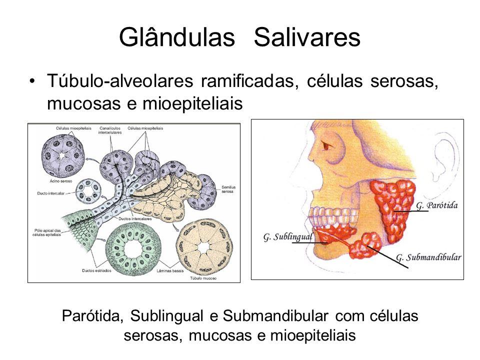 Glândulas SalivaresTúbulo-alveolares ramificadas, células serosas, mucosas e mioepiteliais.