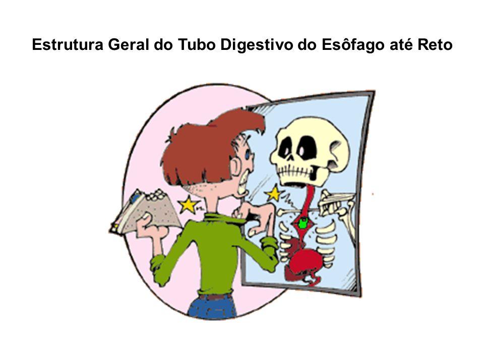Estrutura Geral do Tubo Digestivo do Esôfago até Reto