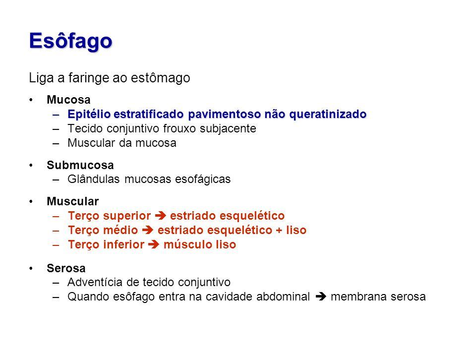 Esôfago Liga a faringe ao estômago Mucosa
