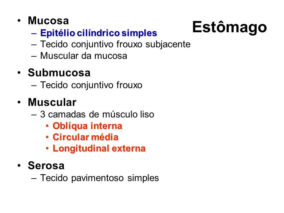 Estômago Mucosa Submucosa Muscular Serosa Epitélio cilíndrico simples