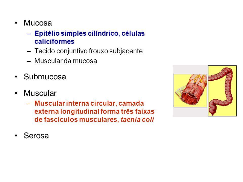 Mucosa Submucosa Muscular Serosa