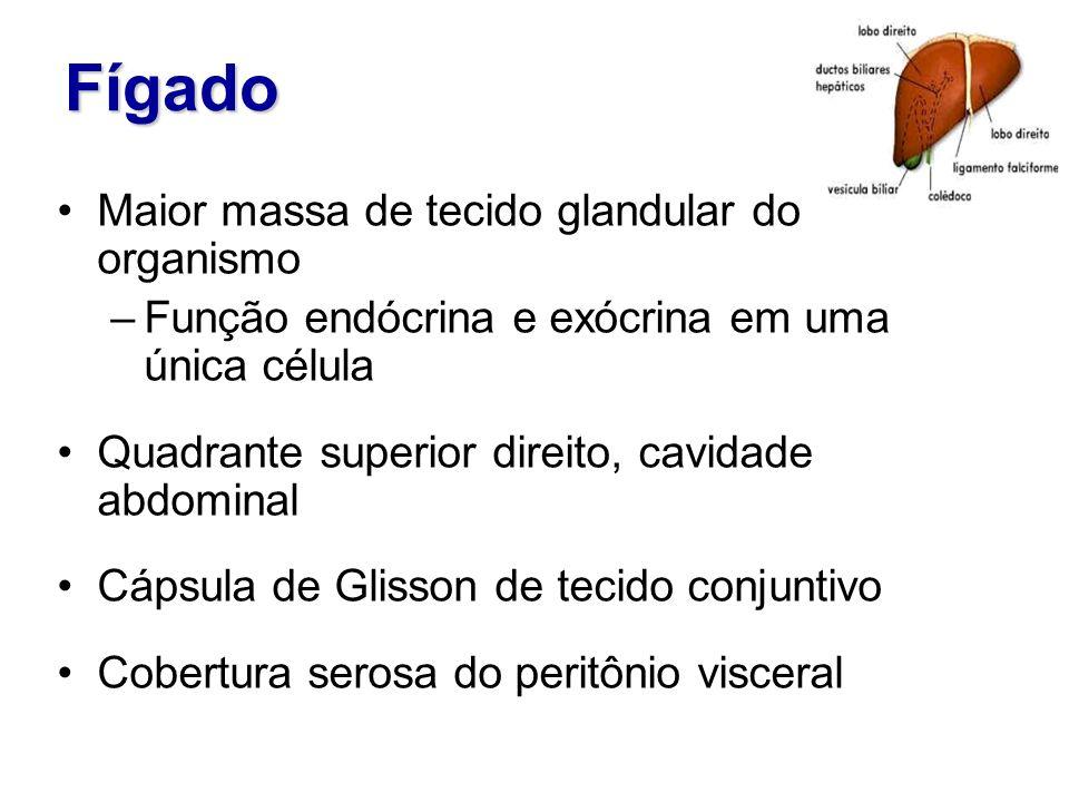Fígado Maior massa de tecido glandular do organismo