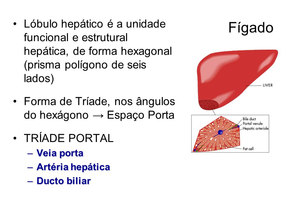 FígadoLóbulo hepático é a unidade funcional e estrutural hepática, de forma hexagonal (prisma polígono de seis lados)