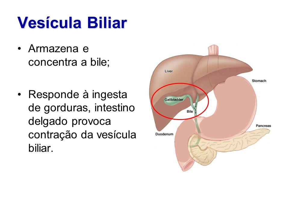 Vesícula Biliar Armazena e concentra a bile;