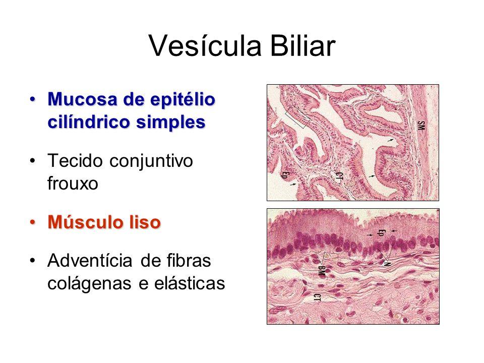 Vesícula Biliar Mucosa de epitélio cilíndrico simples