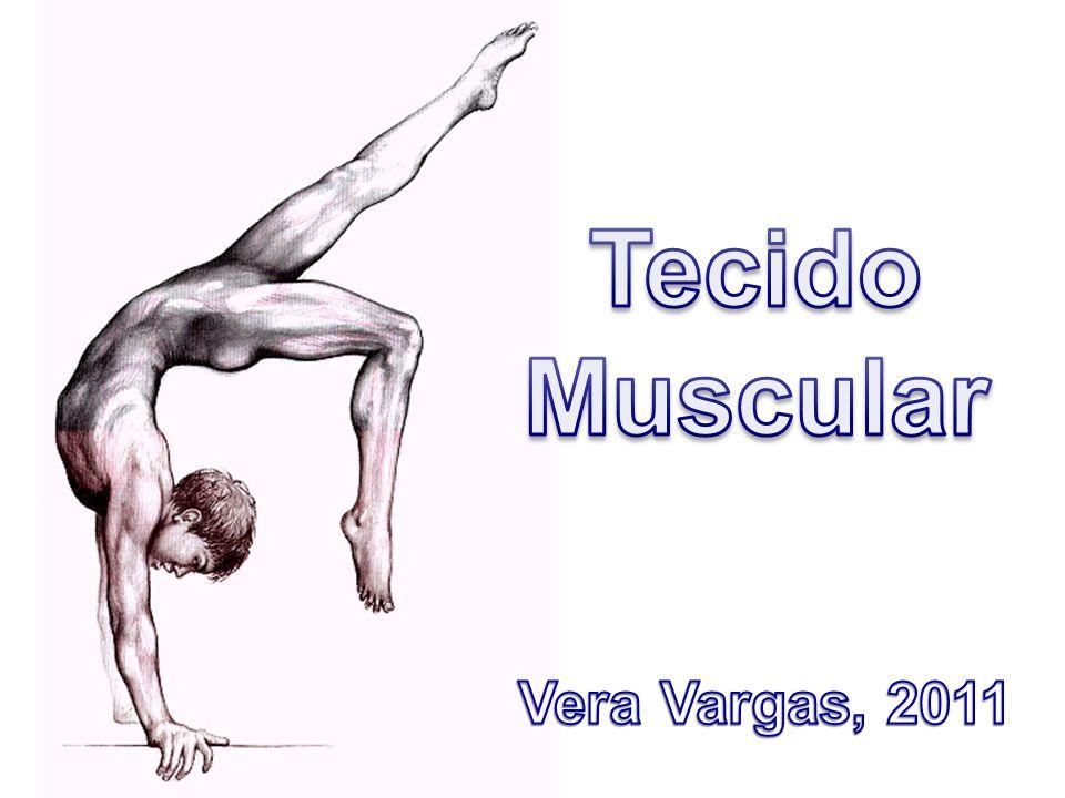 Tecido Muscular Vera Vargas, 2011
