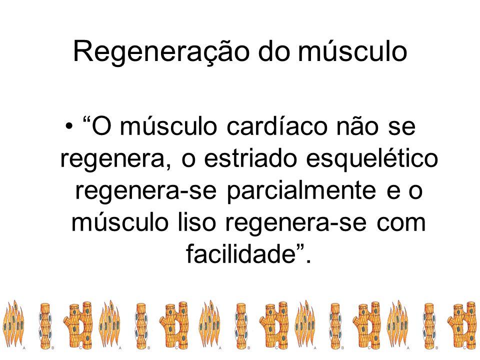 Regeneração do músculo