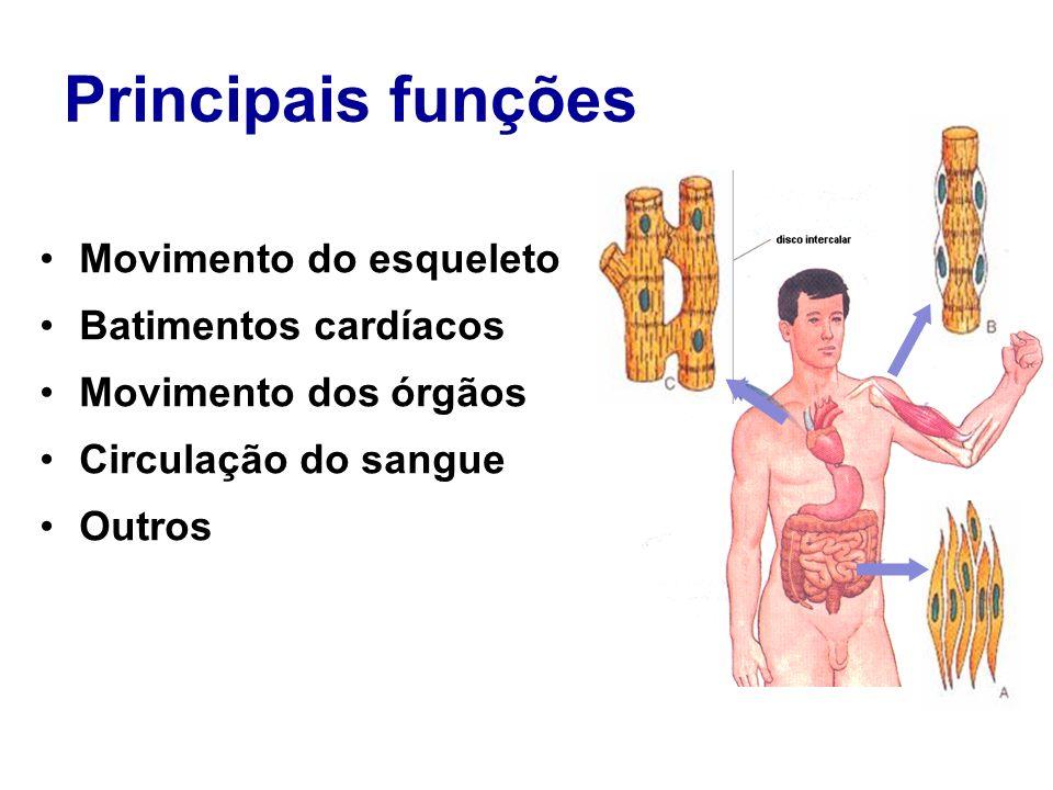 Principais funções Movimento do esqueleto Batimentos cardíacos