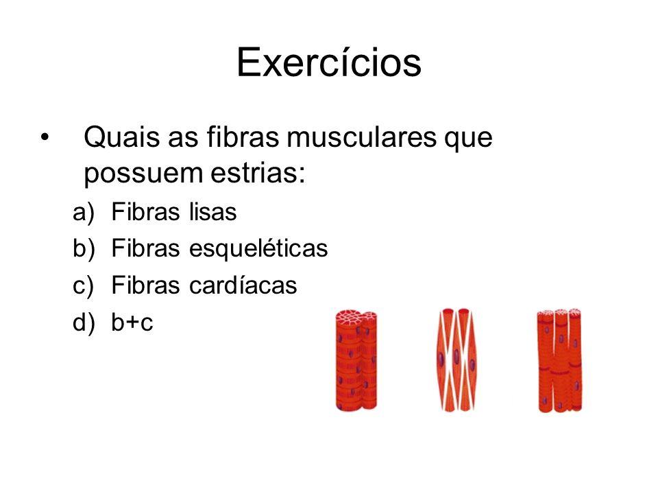 Exercícios Quais as fibras musculares que possuem estrias:
