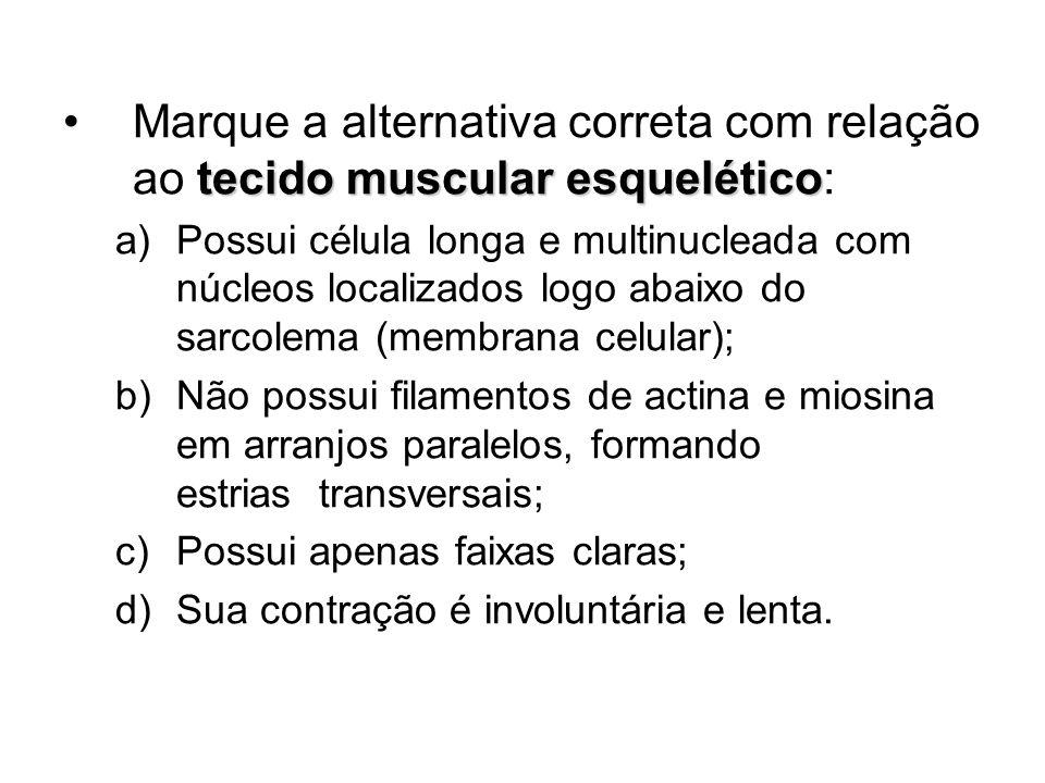 Marque a alternativa correta com relação ao tecido muscular esquelético: