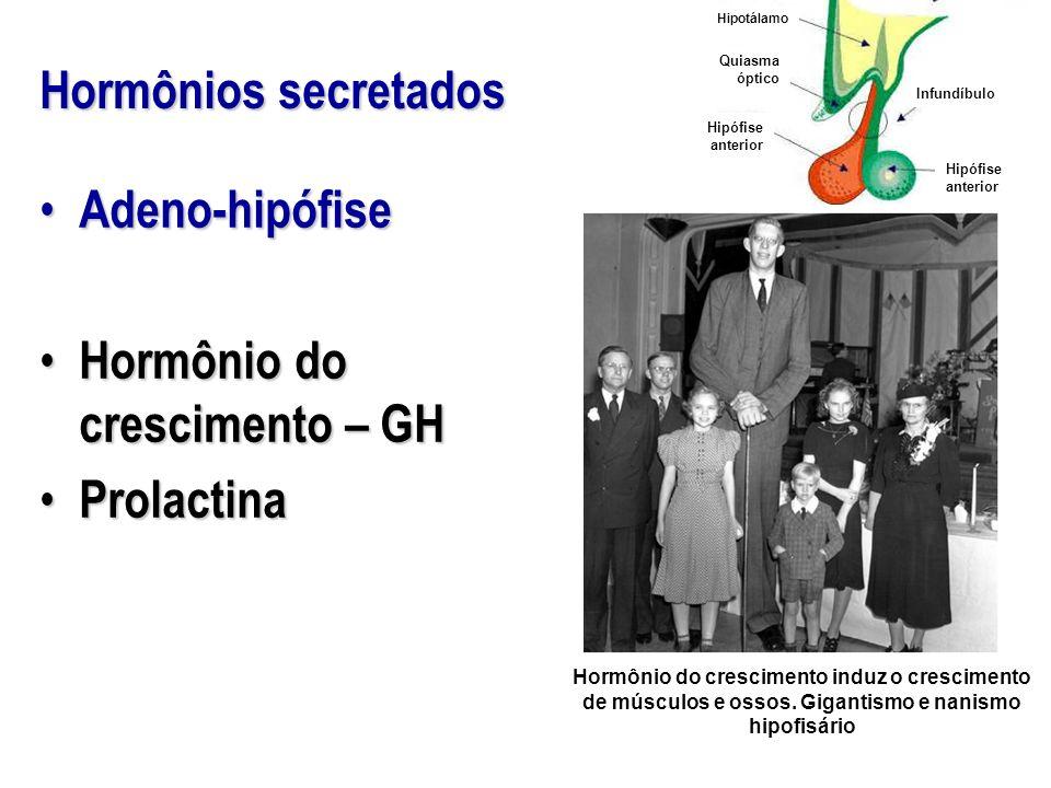 Hormônio do crescimento – GH Prolactina