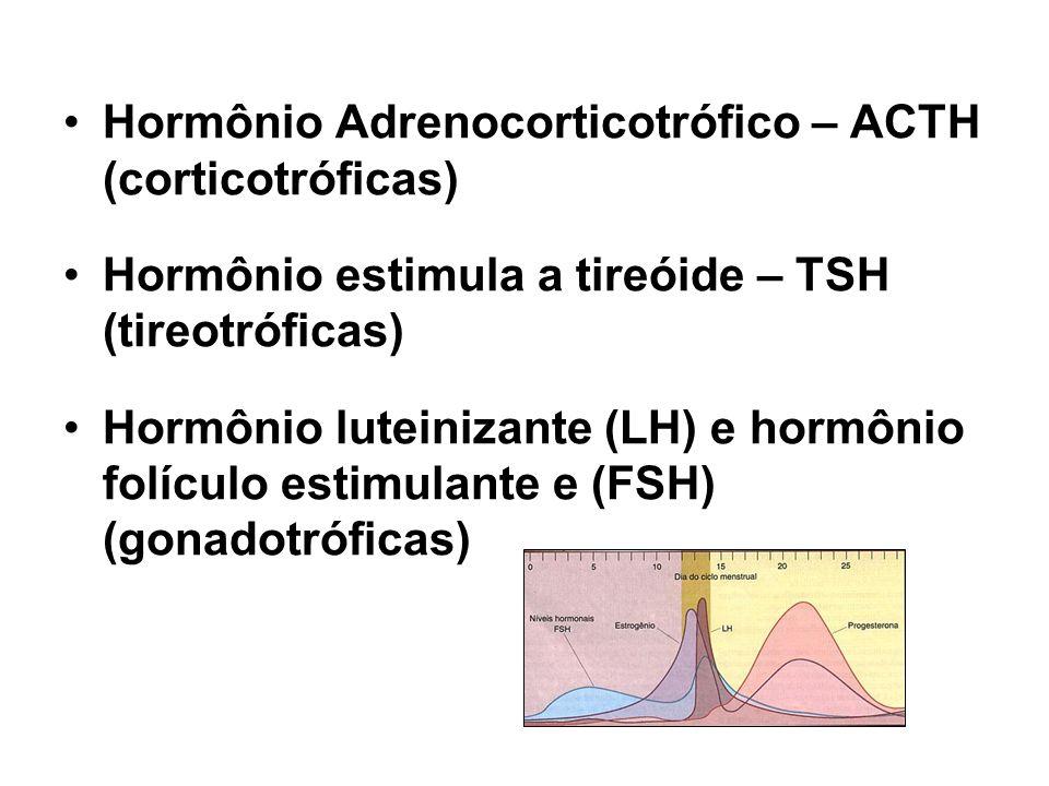 Hormônio Adrenocorticotrófico – ACTH (corticotróficas)