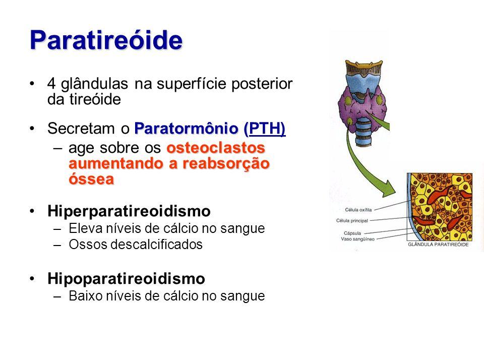 Paratireóide 4 glândulas na superfície posterior da tireóide