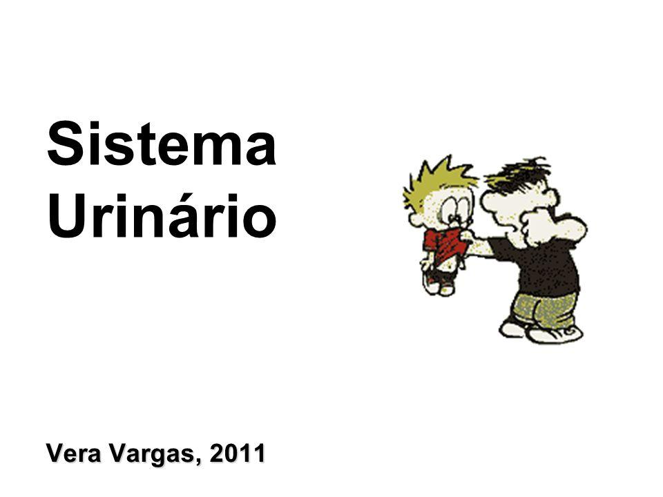 Sistema Urinário Vera Vargas, 2011