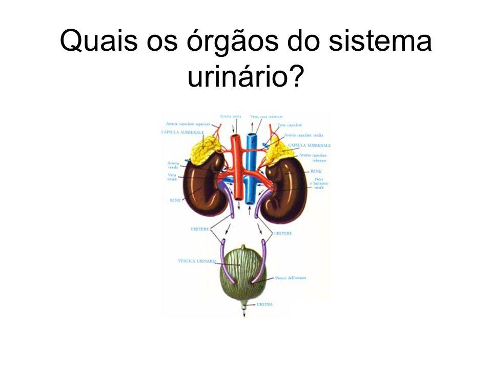 Quais os órgãos do sistema urinário