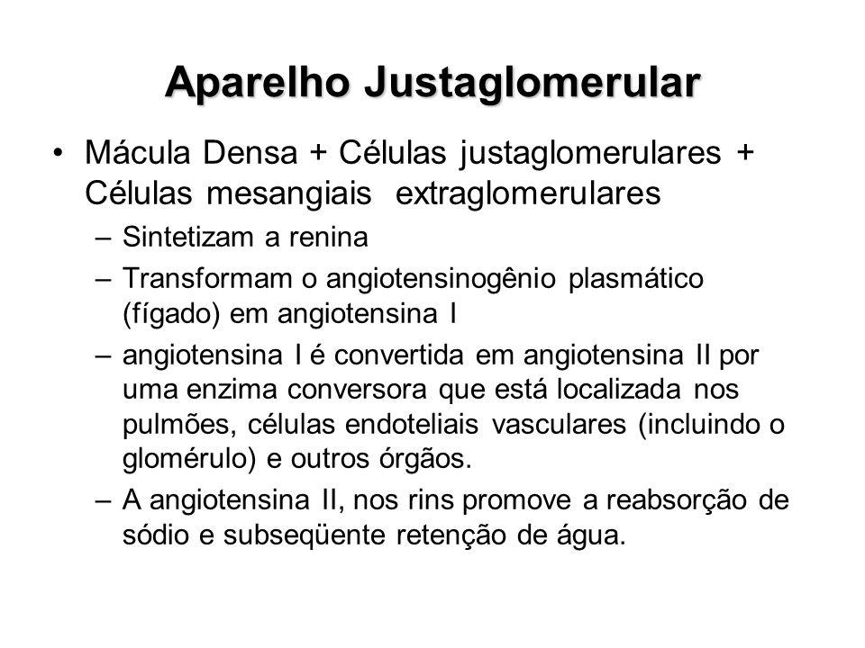 Aparelho Justaglomerular