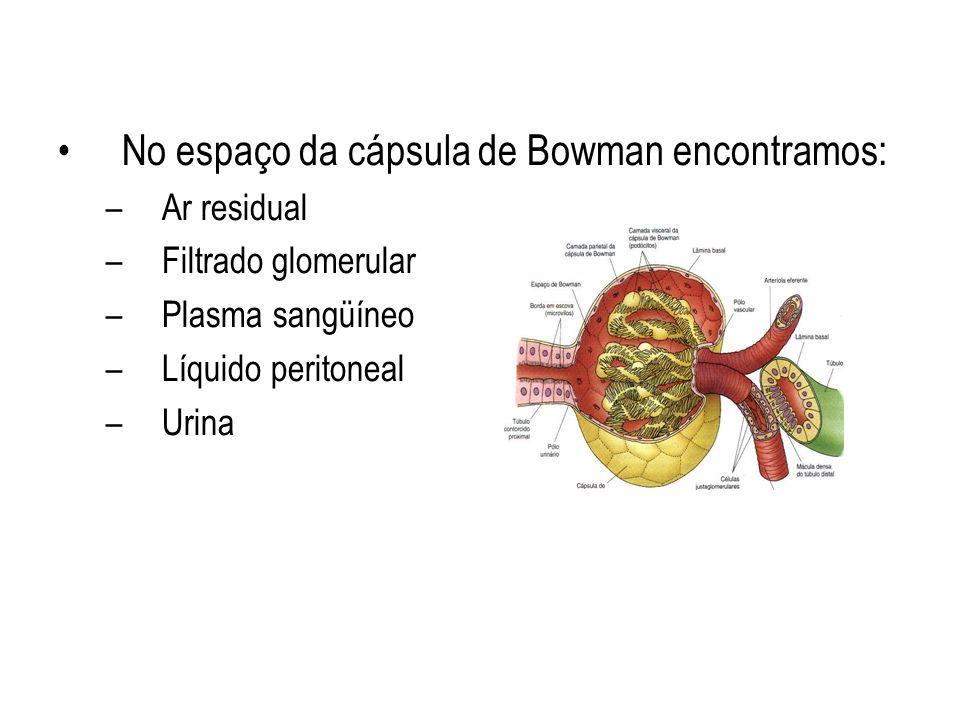 No espaço da cápsula de Bowman encontramos: