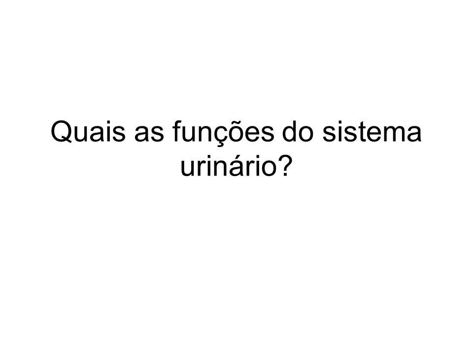 Quais as funções do sistema urinário