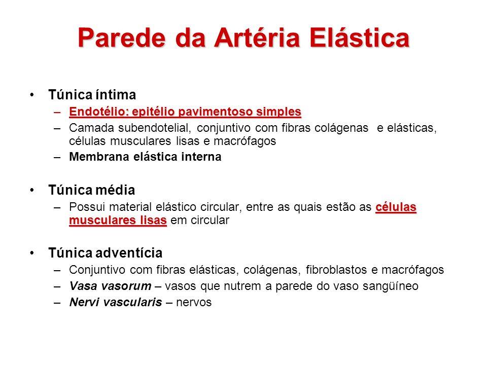 Parede da Artéria Elástica