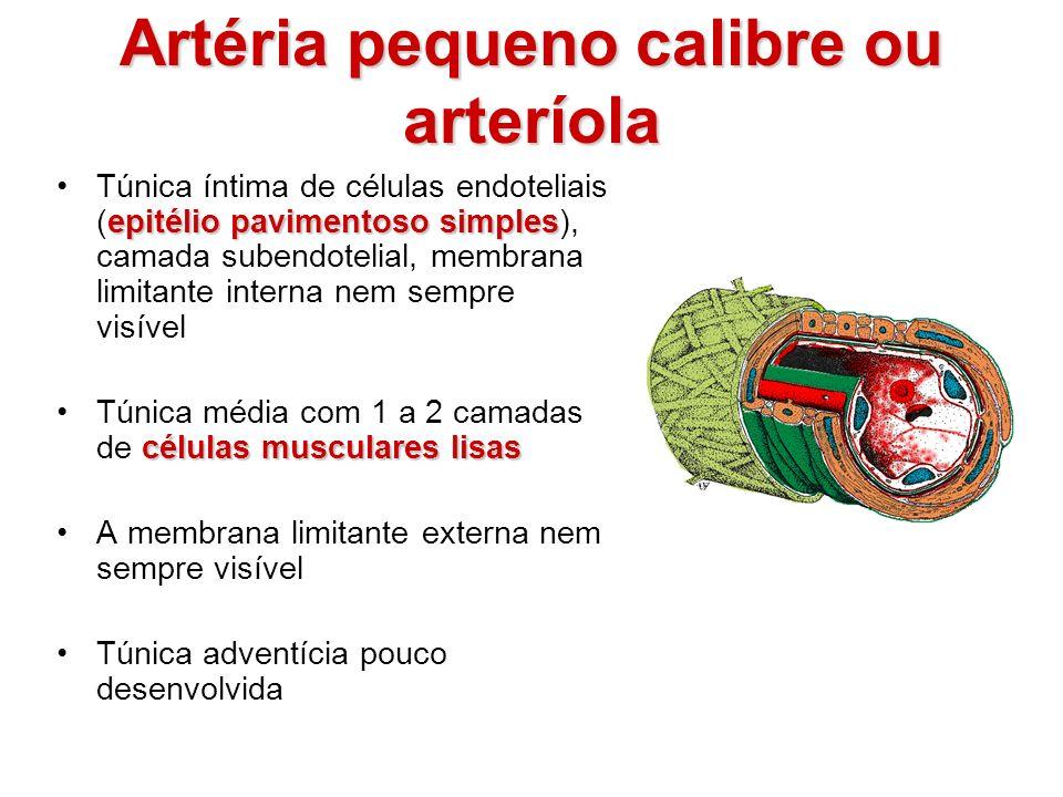 Artéria pequeno calibre ou arteríola