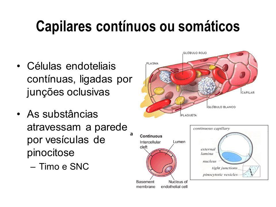 Capilares contínuos ou somáticos
