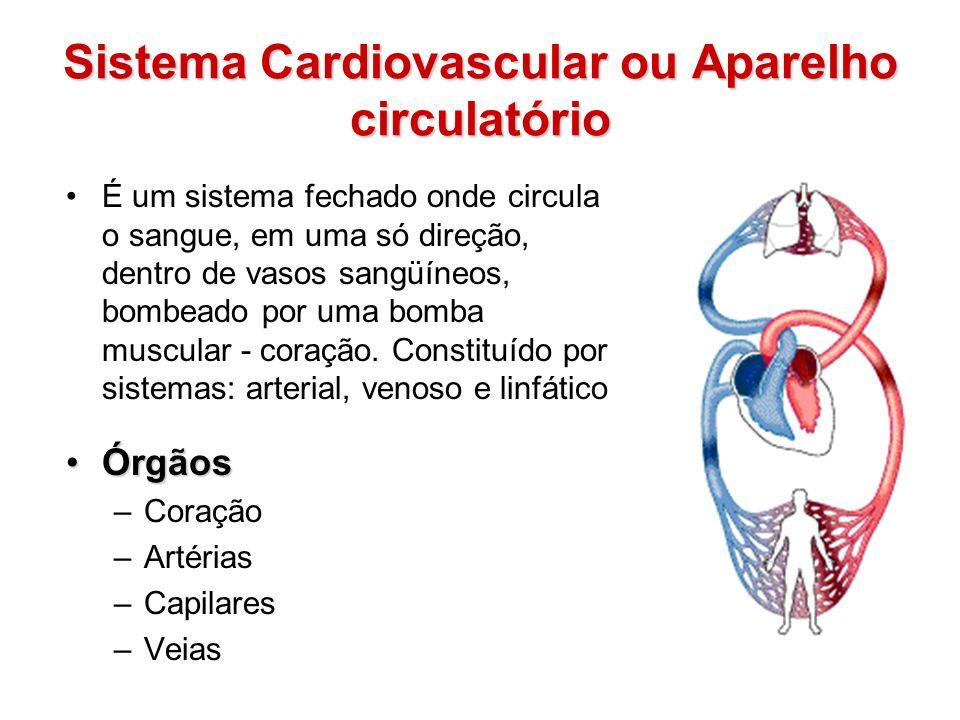 Sistema Cardiovascular ou Aparelho circulatório
