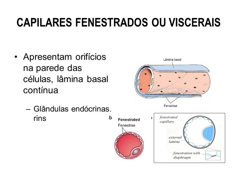CAPILARES FENESTRADOS OU VISCERAIS