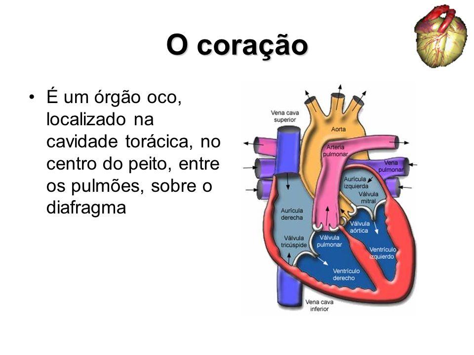 O coração É um órgão oco, localizado na cavidade torácica, no centro do peito, entre os pulmões, sobre o diafragma.