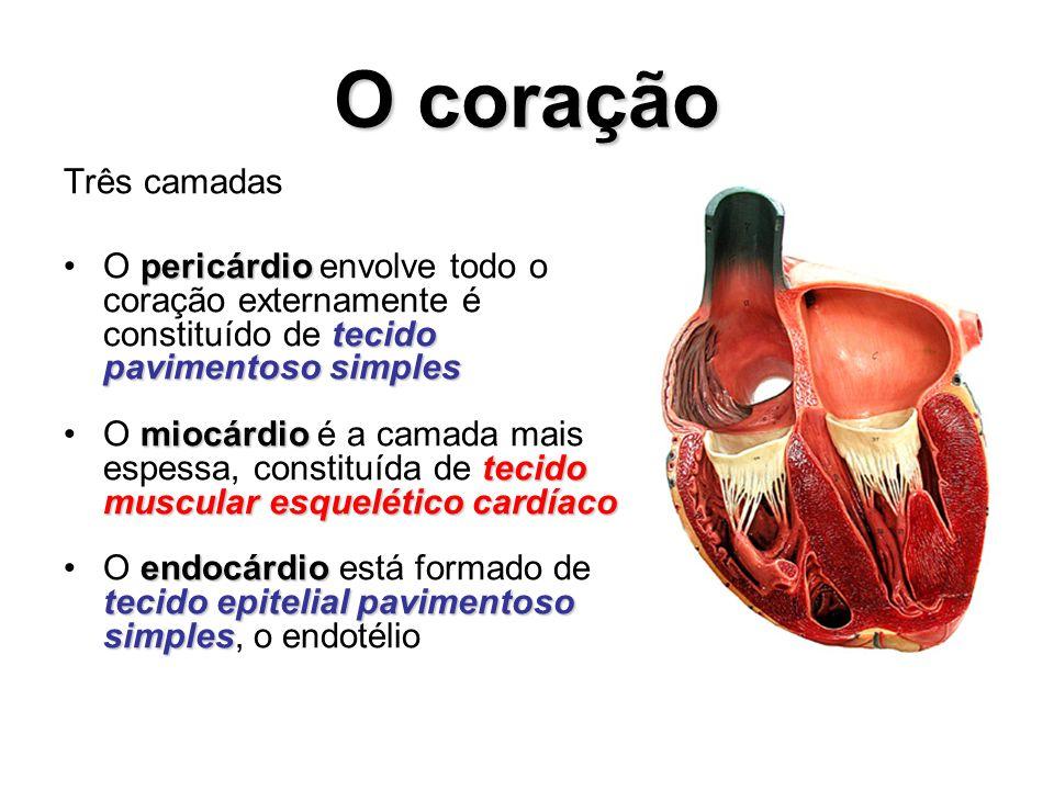 O coração Três camadas. O pericárdio envolve todo o coração externamente é constituído de tecido pavimentoso simples.