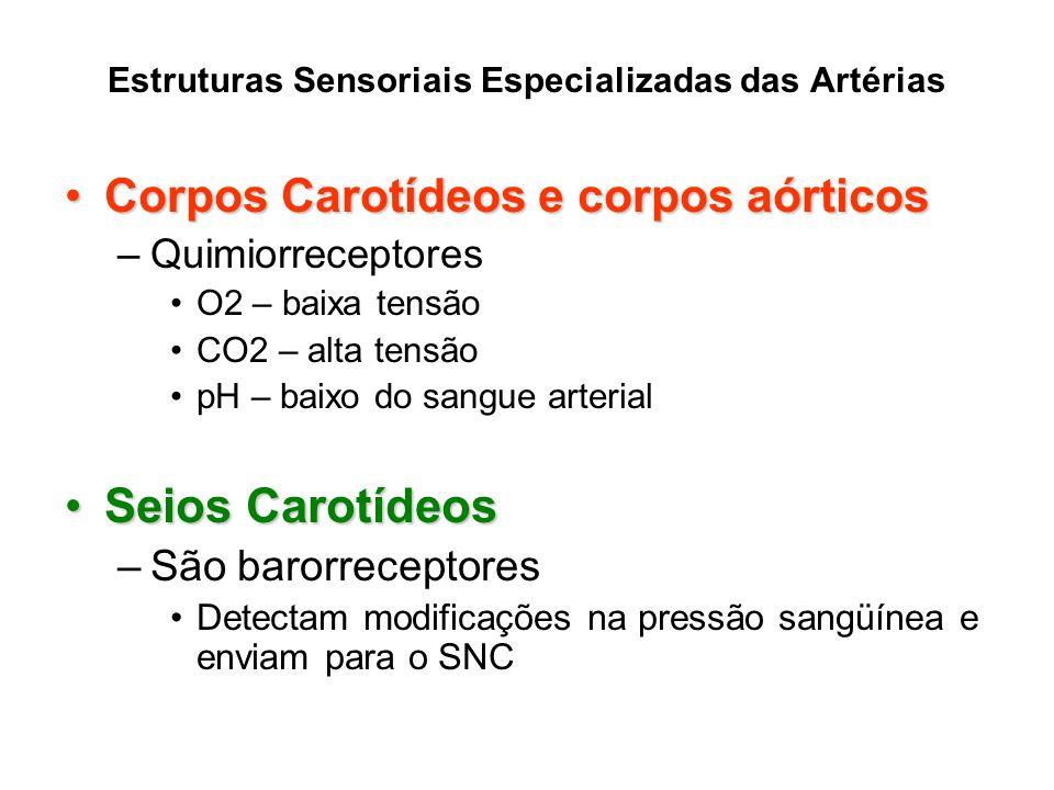 Estruturas Sensoriais Especializadas das Artérias