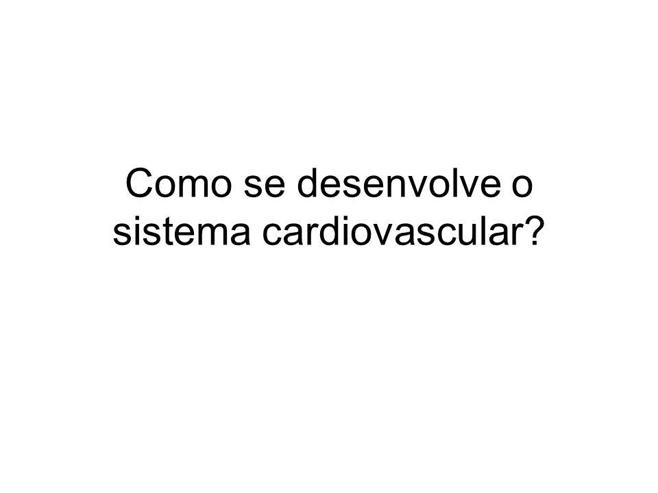 Como se desenvolve o sistema cardiovascular