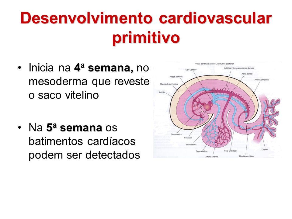 Desenvolvimento cardiovascular primitivo