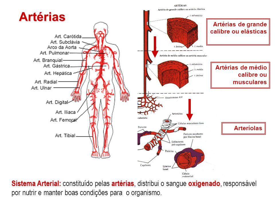 Artérias Artérias de grande calibre ou elásticas. Artérias de médio calibre ou musculares. Arteríolas.