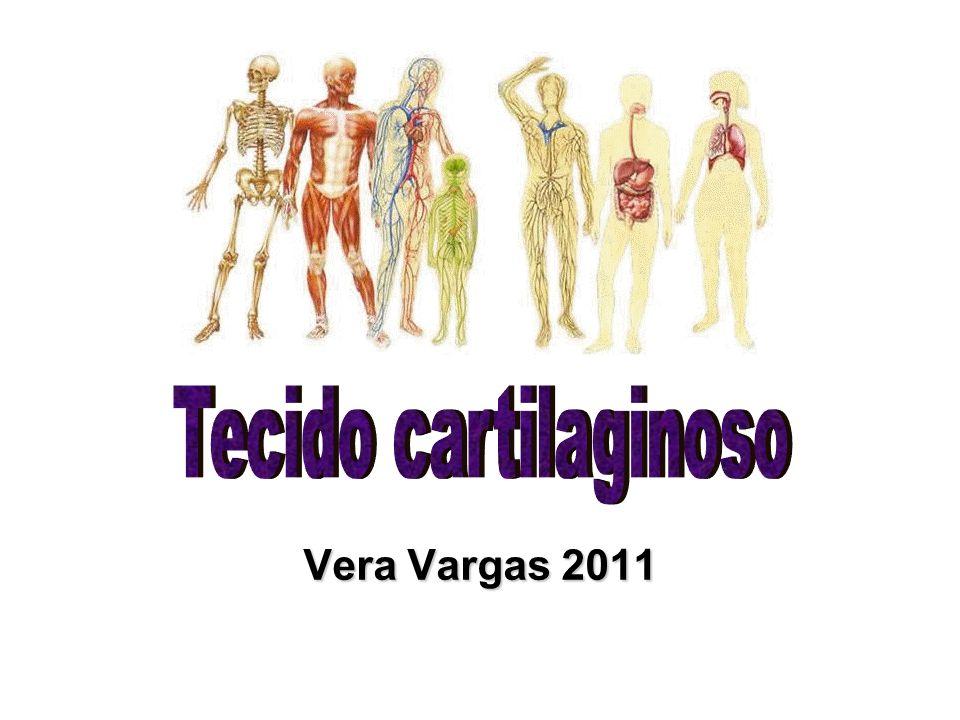 Tecido cartilaginoso Vera Vargas 2011