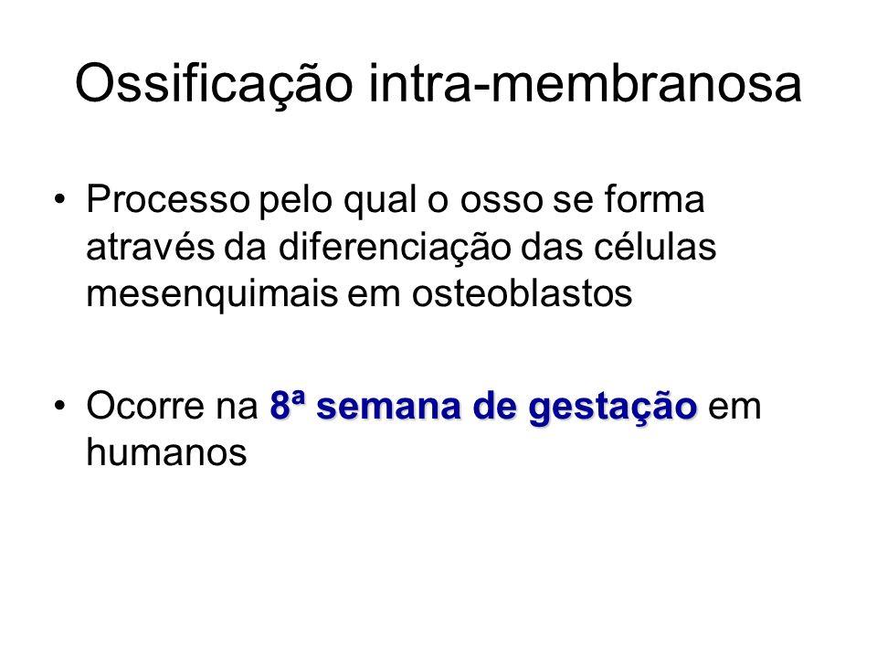 Ossificação intra-membranosa