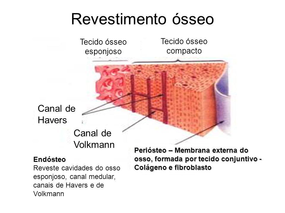 Tecido ósseo esponjoso