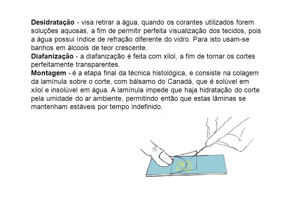 Desidratação - visa retirar a água, quando os corantes utilizados forem soluções aquosas, a fim de permitir perfeita visualização dos tecidos, pois a água possui índice de refração diferente do vidro. Para isto usam-se banhos em álcoois de teor crescente.