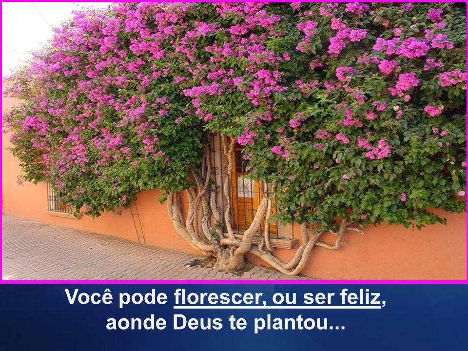 Você pode florescer, ou ser feliz, aonde Deus te plantou...