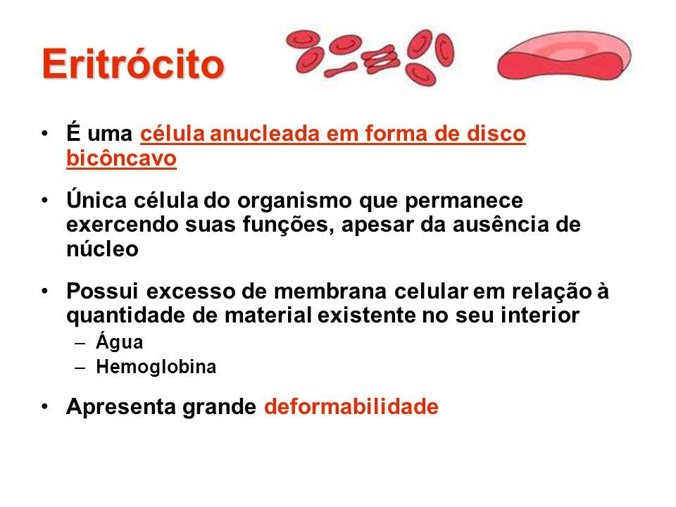 Eritrócito É uma célula anucleada em forma de disco bicôncavo