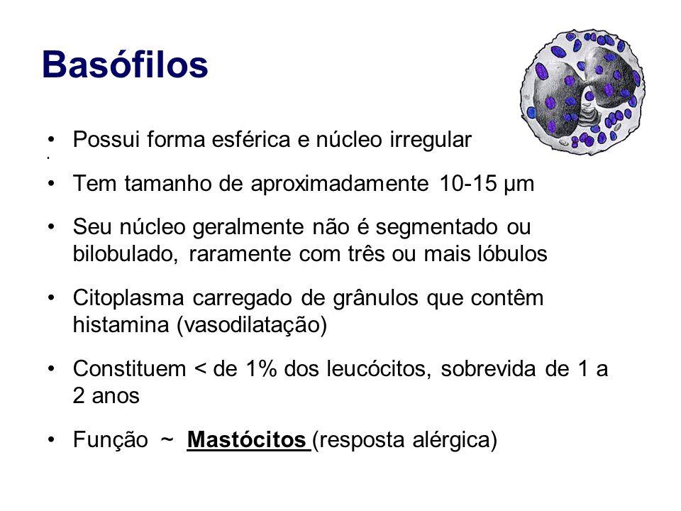 Basófilos Possui forma esférica e núcleo irregular