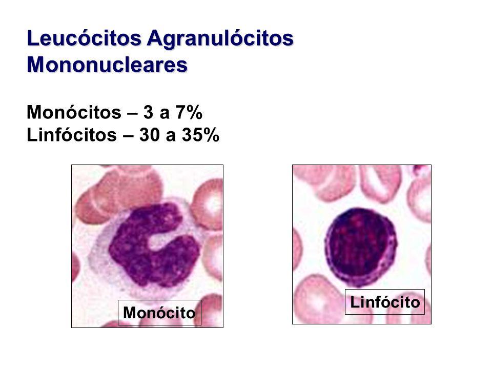 Leucócitos Agranulócitos Mononucleares